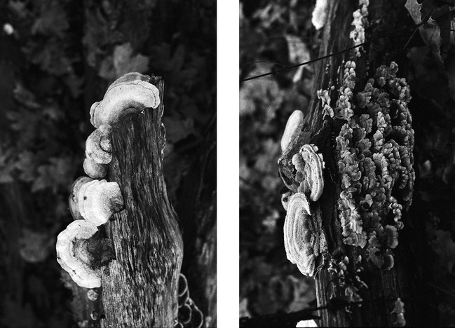 forest13_2web.jpg