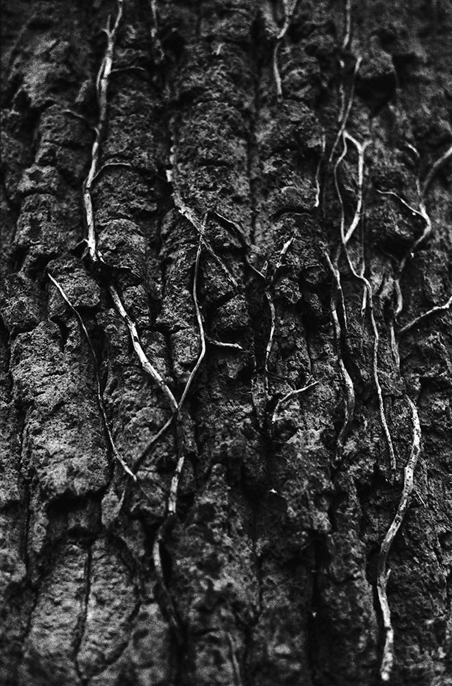 forest9_2web.jpg