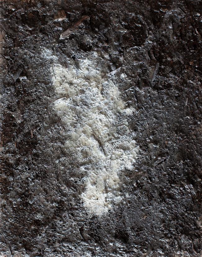 soilweb.jpg