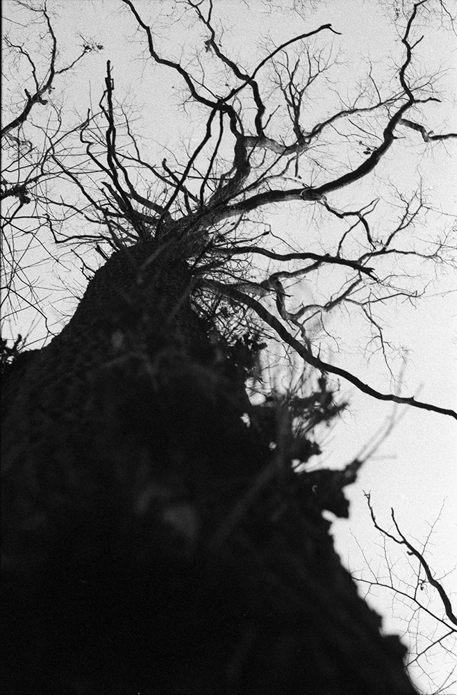 forest10_2web.jpg