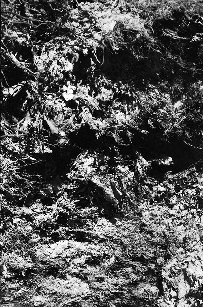 forest11web.jpg