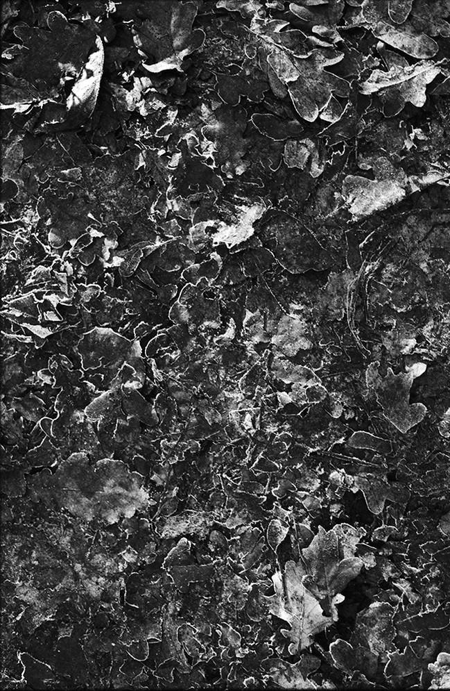 forest8_2web.jpg
