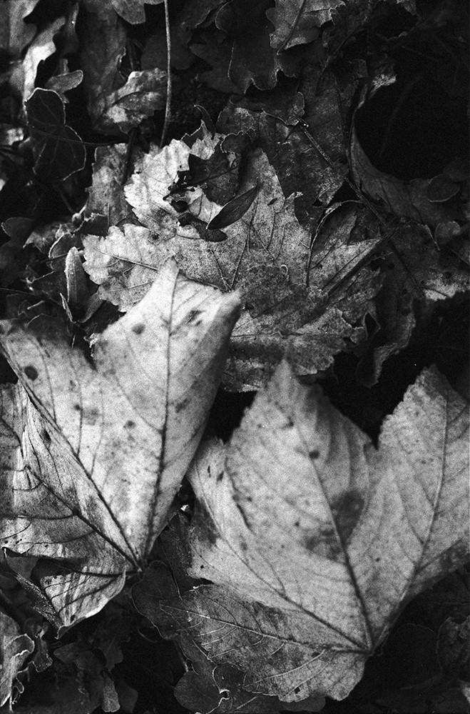 forest3web.jpg