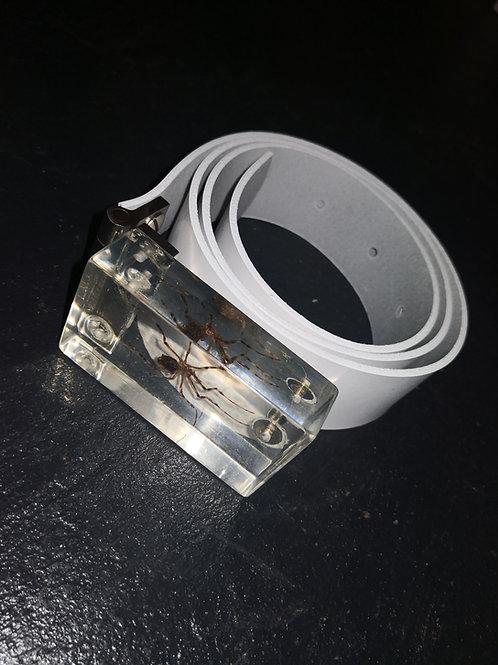 Small spider belt