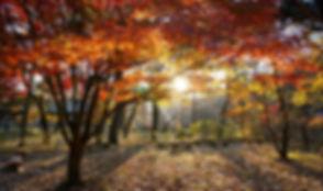 DSC06764_edited.jpg