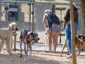 Dog Park Time!