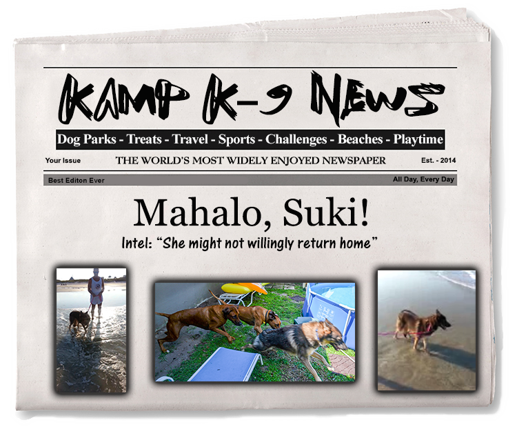 Suki Headlines.png