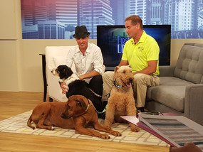 Kamp K-9 LIVE in local NBC Studio!