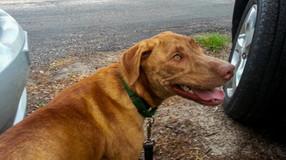 Meet Anxious Mason