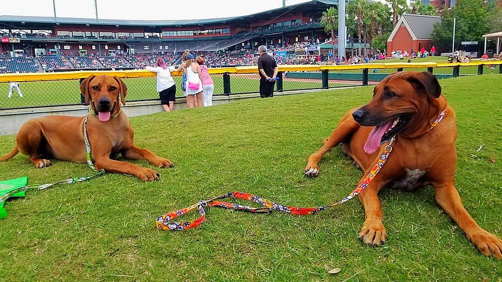 Koa & Malu at the Jacksonville Jumbo Shrimp baseball game