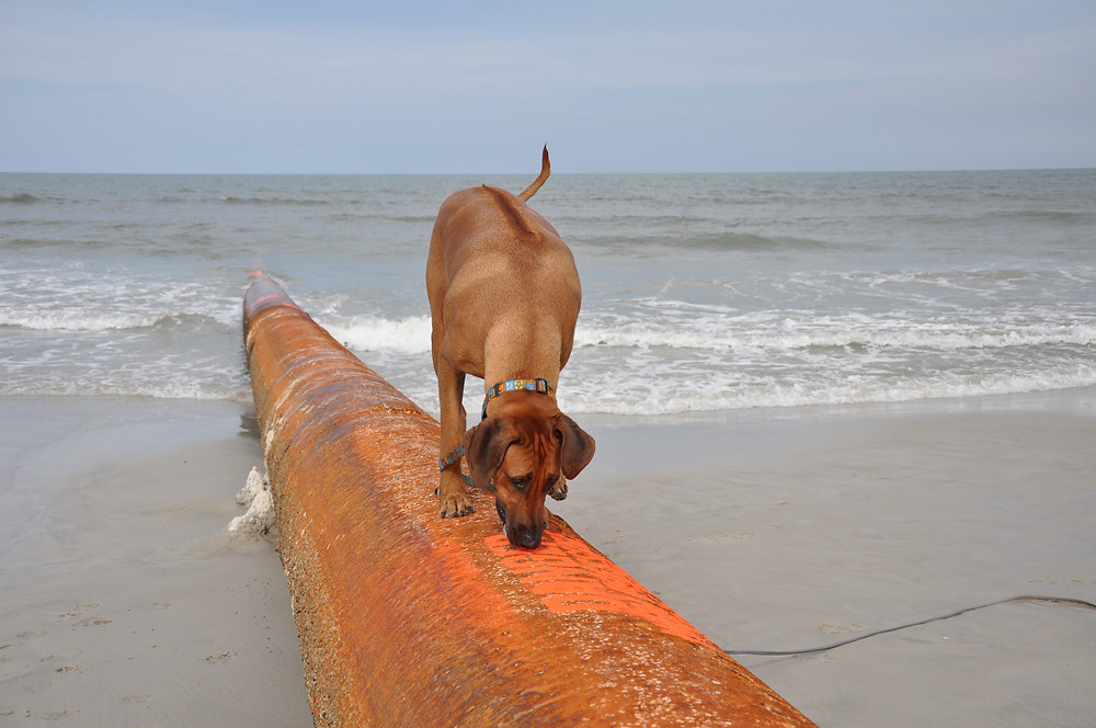 "Koa ""on the pipe"""
