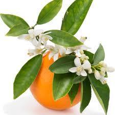Orange Blossom Honey 1-60 lb. BUCKET $310