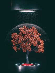 Tree Rain TWO Cam1_0105.jpg