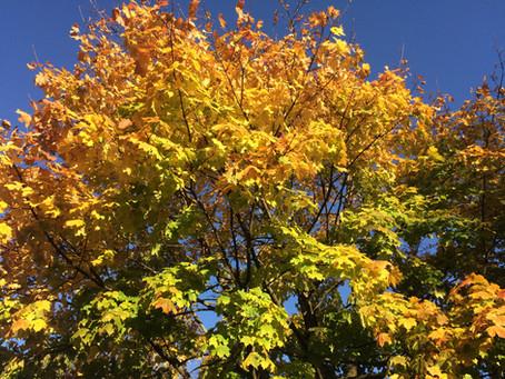 Ayurveda Tipps für den Herbst