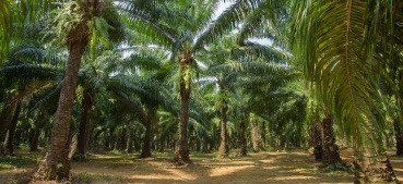 palmöl in der Naturkosmetik - wissenswertes und wichtiges