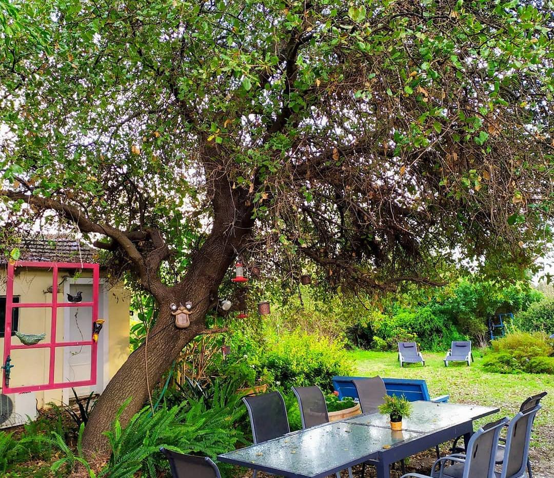 בגינה ארוחה.jpg