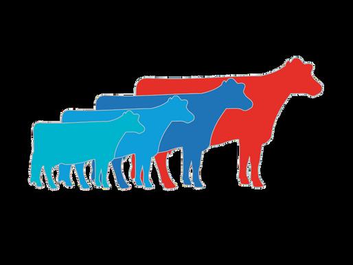 Rencontre bi-annuelle de notre comité scientifique de la Chaire – bilan à mi-chemin!