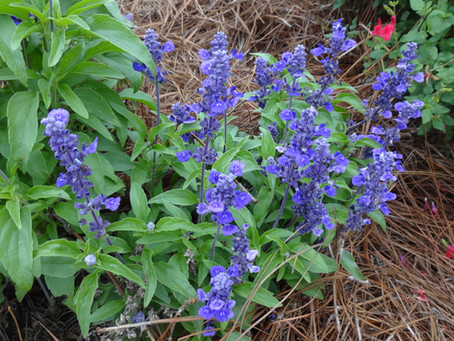 THE 10 BENEFITS OF MULCH
