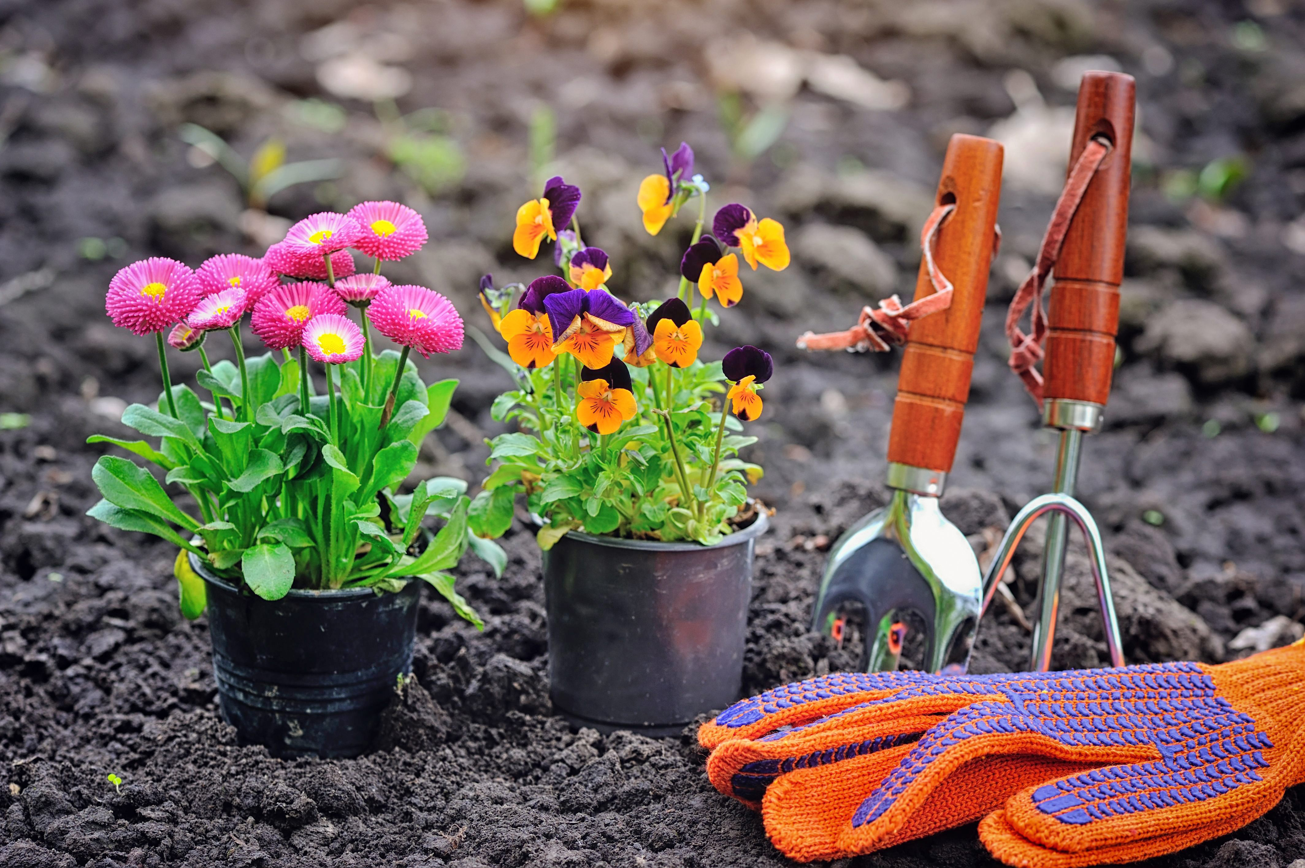 gardening-tools-and-spring-flowers-in-th