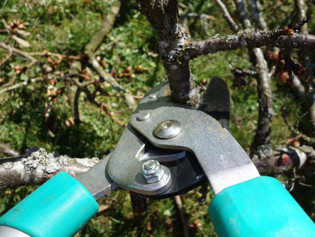 BE SMART ABOUT PRUNING