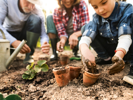 FIVE EASY WAYS TO SPRUCE UP YOUR LANDSCAPING - including projects with children