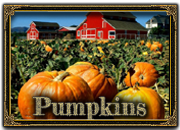 View Pumpkin Farms / Patches in Syracuse and Central New York
