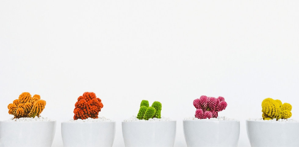 Bunte Kaktuspflanzen