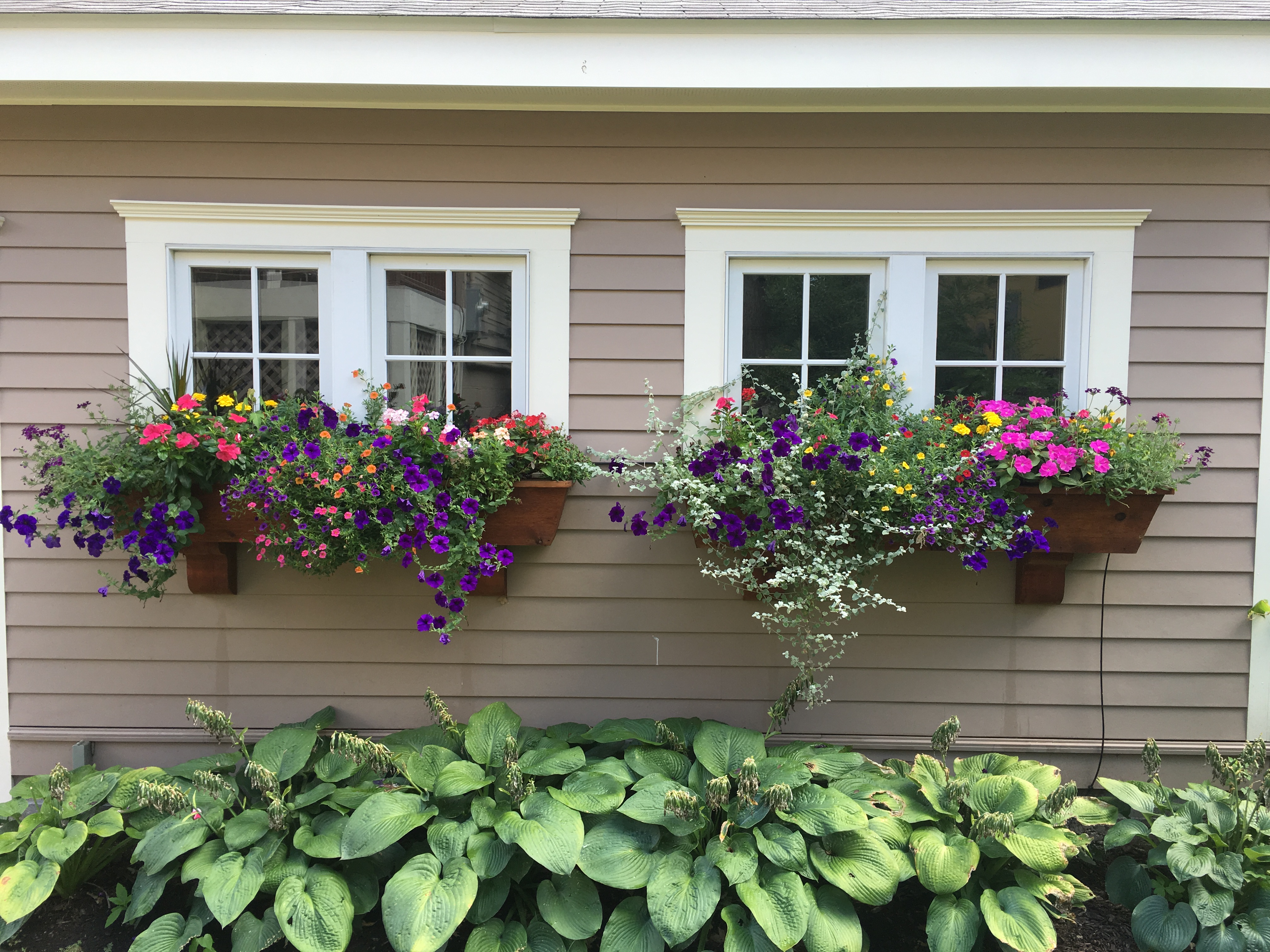 Sunny window boxes