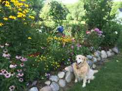 Lynn's dog Roxy admires the flowers
