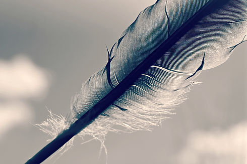 feather-4106529_1920.jpg