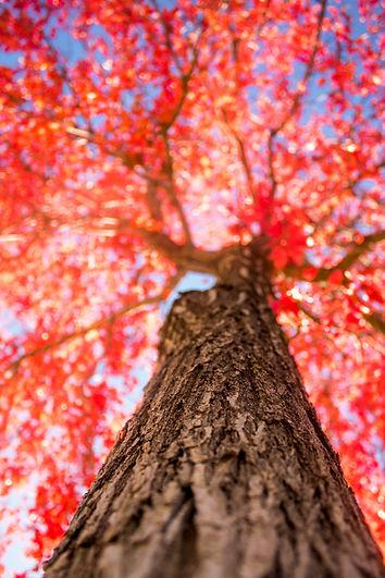 tree-2834973_1920.jpg