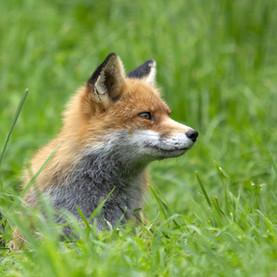 Assistance aux animaux sauvages à Bruxelles : « un parcours du combattant »