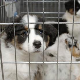 Empêcher la livraison d'animaux à domicile