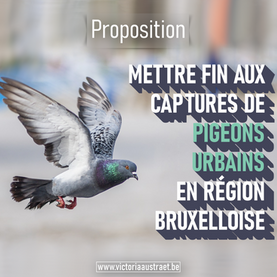 L'éradication des pigeons est une méthode de gestion barbare et inefficace