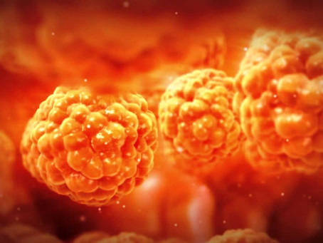 Fat Cells assist in the Fight Against Infections