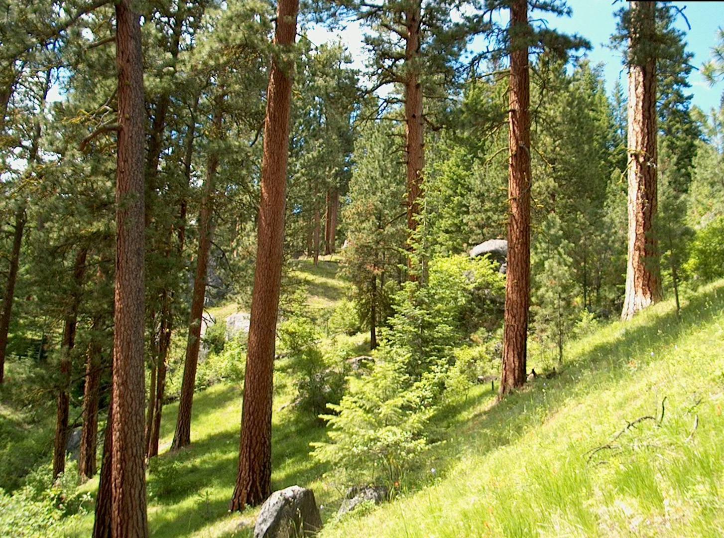 green forest3.jpg