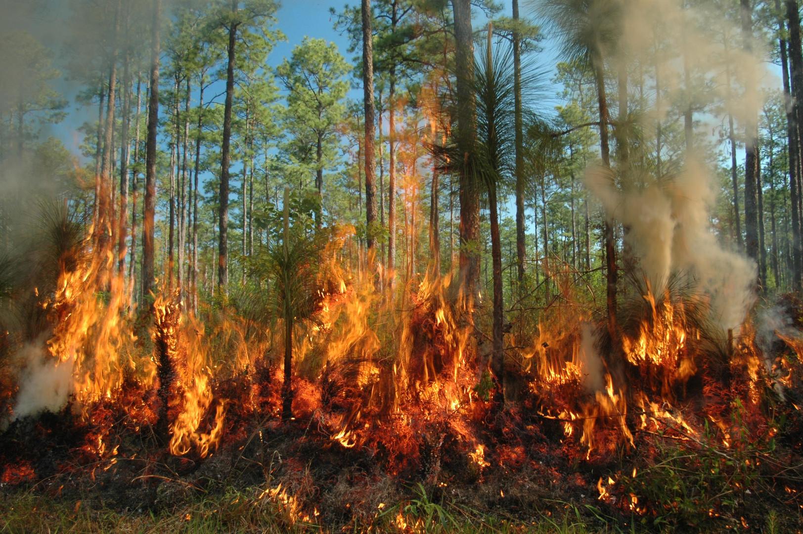 burning forest1.jpg
