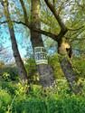 treesinleaf.jpg