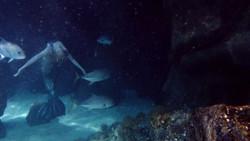 3_Meerjungfrau unterwasser