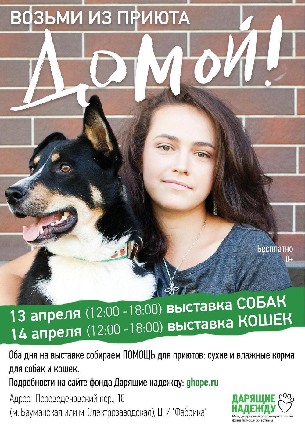 Выставка собак и кошек, взять собаку из приюта, приют для собак