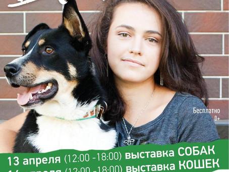 """Выставка собак и кошек """"Домой!"""" 13-14 Апреля"""