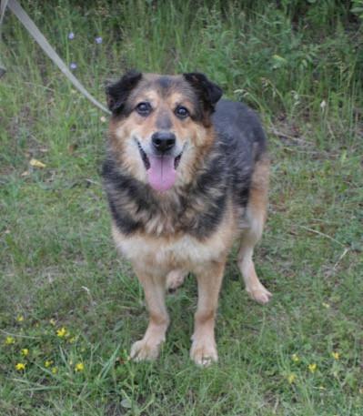 Собака из приюта, щенок, приют для собак в Зеленограде, приют для собак