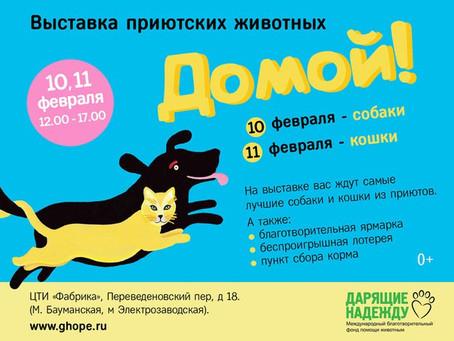 """Мишка на выставке """"Домой!"""" 10 февраля"""