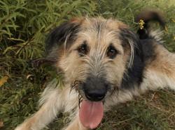 Гена-собака из приюта. Москва