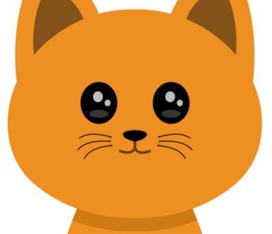 Как забрать кошку из приюта после снятия карантина?
