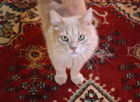 Приюту очень не хватаетпостоянных волонтеров по кошкам.
