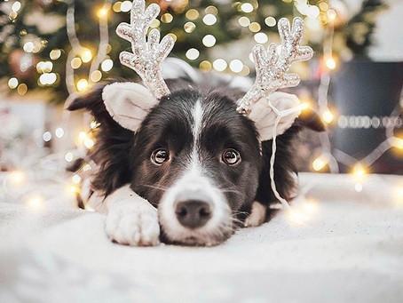 Зелприют поздравляет всех с наступающим Новым годом и Рождеством!