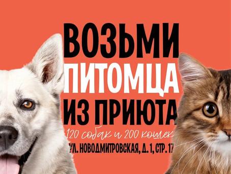 Зеленоградский муниципальный приют на WOOF 16 и 17 ноября!
