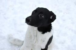 Возьми щенка из приюта в Москве