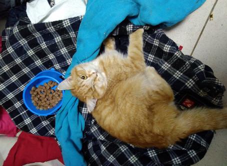 В приюте случилась беда с котом Бильбо!